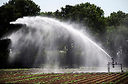 Nederland, Sambeek, 28-5-2020  Beregenen van een akker in de uiterwaarden van de Maas. Foto: Flip Franssen