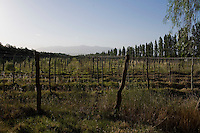 A fallow vineyard in the Luján de Cuyo area of Mendoza, Argentina, stands in the shadow of the Andes mountain range.
