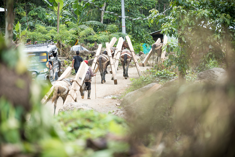 16 November 2018, San José de León, Mutatá, Antioquia, Colombia: Construction work rarely stops in the village. Horses help move wooden logs from one site to another, to help construction of new houses and homes. Following the 2016 peace treaty between FARC and the Colombian government, a group of ex-combatant families have purchased and now cultivate 36 hectares of land in the territory of San José de León, municipality of Mutatá in Antioquia, Colombia. A group of 27 families first purchased the lot of land in San José de León, moving in from nearby Córdoba to settle alongside the 50-or-so families of farmers already living in the area. Today, 50 ex-combatant families live in the emerging community, which hosts a small restaurant, various committees for community organization and development, and which cultivates the land through agriculture, poultry and fish farming. Though the community has come a long way, many challenges remain on the way towards peace and reconciliation. The two-year-old community, which does not yet have a name of its own, is located in the territory of San José de León in Urabá, northwest Colombia, a strategically important corridor for trade into Central America, with resulting drug trafficking and arms trade still keeping armed groups active in the area. Many ex-combatants face trauma and insecurity, and a lack of fulfilment by the Colombian government in transition of land ownership to FARC members makes the situation delicate. Through the project De la Guerra a la Paz ('From War to Peace'), the Evangelical Lutheran Church of Colombia accompanies three communities in the Antioquia region, offering support both to ex-combatants and to the communities they now live alongside, as they reintegrate into society. Supporting a total of more than 300 families, the project seeks to alleviate the risk of re-victimization, or relapse into violent conflict.