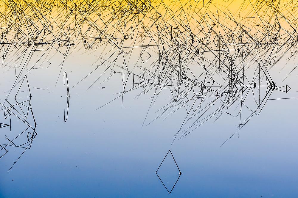 Reeds, evening light, September, Schoolcraft Lake, Hubbard County, Minnesota, USA