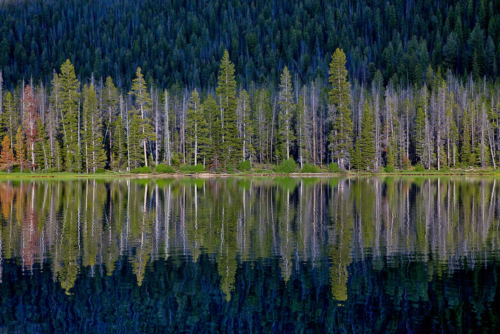 Lodgepole Pine forest reflects in calm surface of Stanley Lake in Central Idaho in summer.  Licensing and Open Edition Prints.
