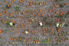 2021_09_13_Pumpkin_Harvest_Prepared_PM