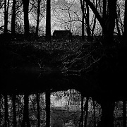 Stony Brook, Updike Farm