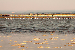 Il complesso produttivo delle saline è situato nel comune italiano di Margherita di Savoia (nome dato dagli abitanti in onore alla regina d'Italia che molto si adoperò nei confronti dei salinieri) nella provincia di Barletta-Andria-Trani in Puglia. Sono le più grandi d'Europa e le seconde nel mondo, in grado di produrre circa la metà del sale marino nazionale (500.000 di tonnellate annue).All'interno dei suoi bacini si sono insediate popolazioni di uccelli migratori e non, divenuti stanziali quali il fenicottero rosa, airone cenerino, garzetta, avocetta, cavaliere d'Italia, chiurlo, chiurlotello, fischione, volpoca..Panoramica di un grande bacino con presenza sul fondo di  un gruppo di fenicotteri rosa..
