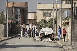November 11, 2016 - Mosul, Nineveh, Iraq - 11/11/2016. Mosul, Iraq. Residents, and geese, are seen on a street in Mosul's Al Intisar District on the south east side of the city. The Al Intisar district was taken four days ago by Iraqi Security Forces (ISF) and, despite its proximity to ongoing fighting between ISF and ISIS militants, many residents still live in the settlement without regular power and water and with dwindling food supplies...The battle to retake Mosul, which fell June 2014, started on the 16th of October 2016 with Iraqi Security Forces eventually reaching the city on the 1st of November. Since then elements of the Iraq Army and Police have succeeded in pushing into the city and retaking several neighbourhoods allowing civilians living there to be evacuated - though many more remain trapped within Mosul. (Credit Image: © Matt Cetti-Roberts via ZUMA Wire)