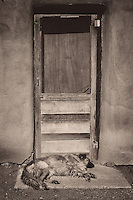 Guard Dog Sleeping at the Front Door. Taos Pueblo, New Mexico. Image taken with a Nikon D800 an 35 mm f/1.4G lens (ISO 100, 35 mm, f/8, 1/640 sec). Converted to B&W with NIK Silver Efex Pro 2.