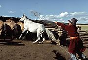 Amur Turching catches his horse with a lasso. Near Moron town, Khövsgöl province.