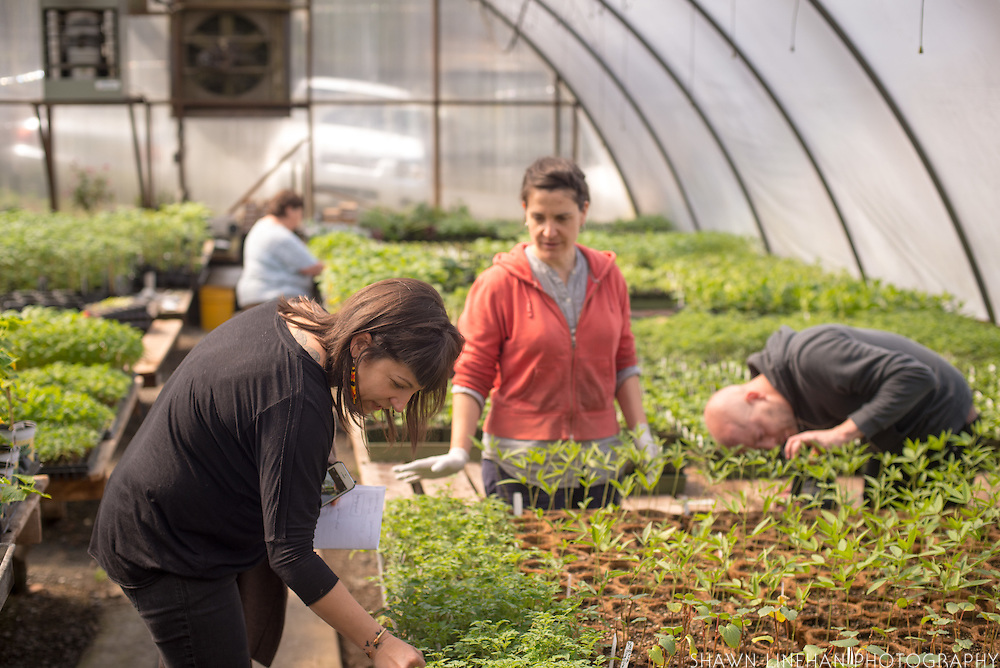 Myrtle, Lane, and Tim in one of the many green houses at Log House Plants in Cottage Grove, Oregon