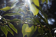 Crato_CE, Brasil.<br /> <br /> Floresta Nacional do Araripe-Apodi em Crato, Ceara.<br /> <br /> Araripe-Apodi National Forest in Crato, Ceara.<br /> <br /> Foto: LEO DRUMOND / NITRO