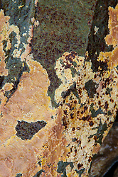 Lichens on Rock Face, Holbrook Island Sanctuary, Brooksville, Maine, US