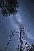 "Starry skay with Milky Way over nightly silhouettes of several scots pines and few standing dead birch trees, nature reserve ""Augstroze"",Latvia Ⓒ Davis Ulands 