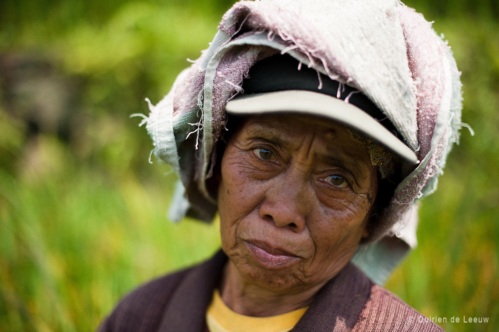 Woman in rice field Malang, Java, Indonesia