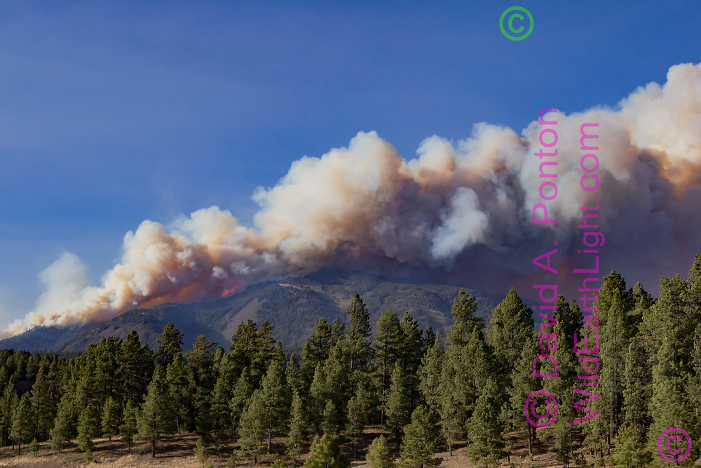 Thompson Fire burning across Redondo Peak June 3, 2013, viewed from the south. Valles Caldera National Preserve, New Mexico, © 2013 David A. Ponton