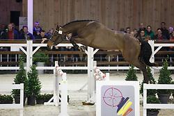 028 - Mon Reve Vt Merelnest<br /> Hengstenkeuring BWP - Azelhof - Koningshooikt 2015<br /> ©  Dirk Caremans