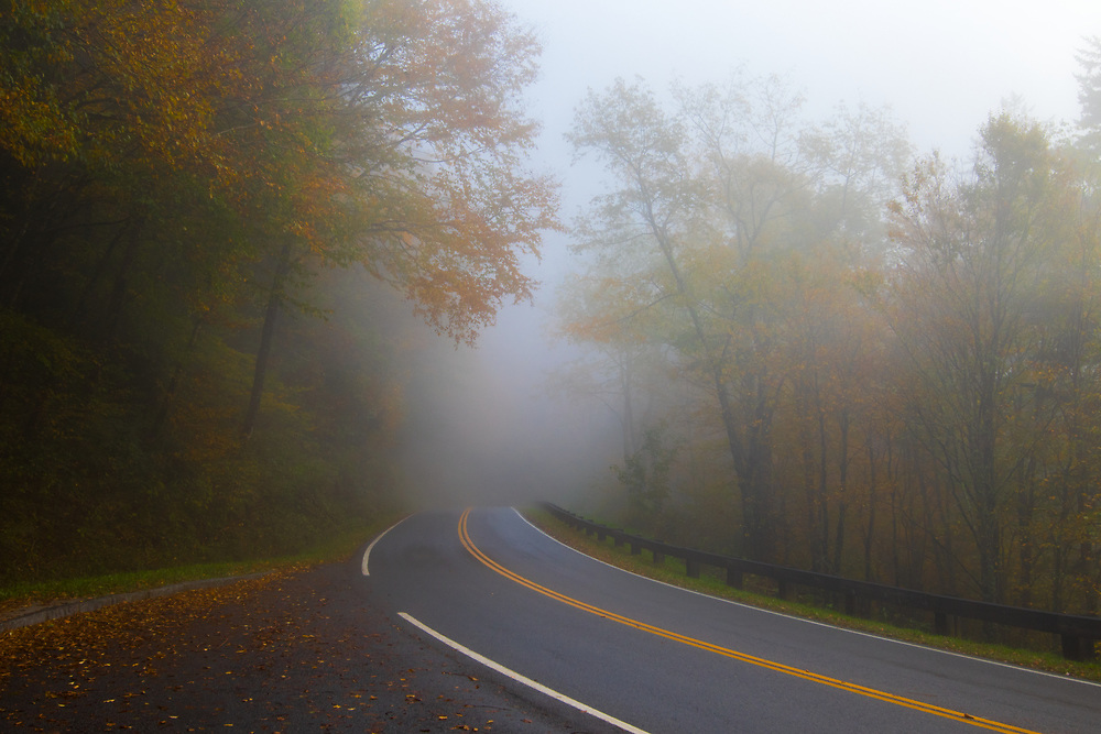October 11, 2017: The fog lifts from the woods enroute to Newfound Gap.