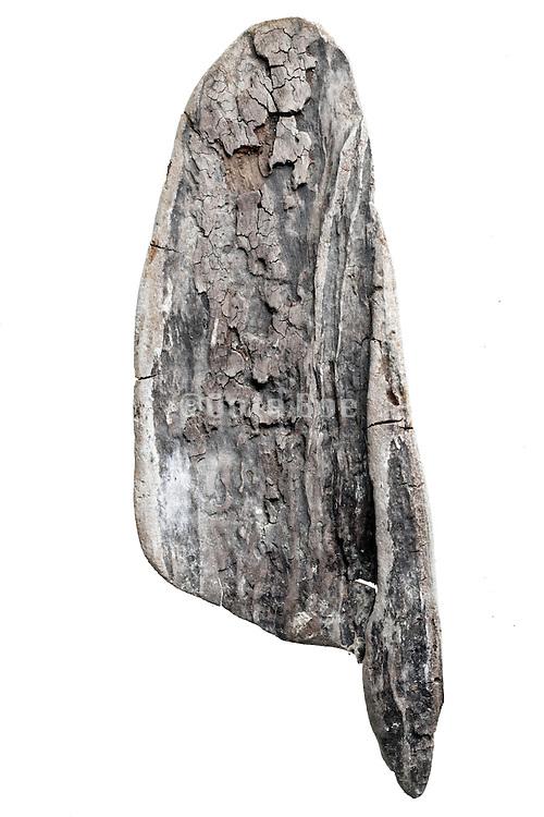 broken wood fragment form natural smoothed