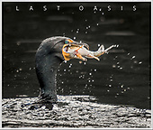 """BOOK:  """"Last Oasis:  Revisiting Union Bay"""""""