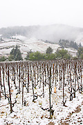 Cornas. Vineyards under snow in seasonably exceptional weather in April 2005. Cornas, Ardeche, Ardèche, France, Europe