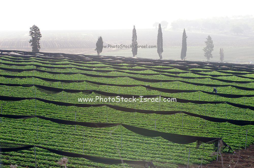 Israel, Jezreel valley people working in the agricultural fields