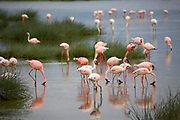 Flamingos in the water in the Ngorongoro Crater