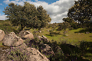 Scenery<br /> Sierra de Andújar Natural Park, Mediterranean woodland of Sierra Morena, north east Jaén Province, Andalusia. SPAIN<br /> <br /> Mission: Iberian Lynx, May 2009<br /> © Pete Oxford / Wild Wonders of Europe<br /> Zaldumbide #506 y Toledo<br /> La Floresta, Quito. ECUADOR<br /> South America<br /> Tel: 593-2-2226958<br /> e-mail: pete@peteoxford.com<br /> www.peteoxford.com