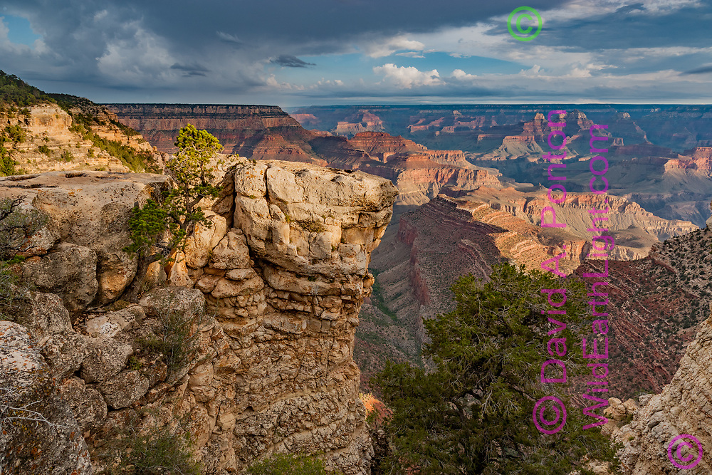 Early morning light in the Grand Canyon from near Grandview Point, with rock forms and Piñon trees, Grand Canyon National Park, © David A. Ponton