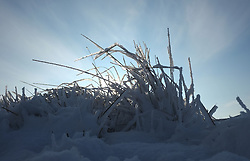 © Licensed to London News Pictures. <br /> 27/12/2014. <br /> <br /> Castleton, United Kingdom.<br /> <br /> Frozen vegetation on the North Yorkshire Moors near Castleton after overnight snowfall caused disruption in some parts of the country.<br /> <br /> Photo credit : Ian Forsyth/LNP