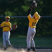 A fielder takes a catch during the Norwalk Little League baseball competition at Broad River Fields, Norwalk, Connecticut. USA. Photo Tim Clayton