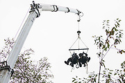 Enforcement agents from the National Eviction Team NET use a cherry picker as they commence works to evict environmental activists opposed to the HS2 high-speed rail link from Wendover Active Resistance WAR camp on 10th October 2021 in Wendover, United Kingdom. WAR camp, which contains tree houses, tunnels, a cage and a 15-metre tower, is currently the largest of the protest camps set up by Stop HS2 activists along HS2s Phase 1 route between London and Birmingham.