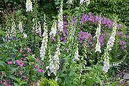 Special Plants Nursery