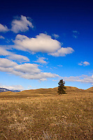 A solitary tree stands out against the stark barren ground of this Okanagan farmland...©2009, Sean Phillips.http://www.Sean-Phillips.com