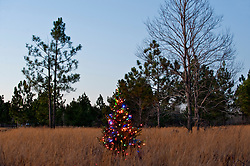 Lighted Christmas Tree in a Field