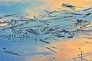 Aquatic vegetation (Sparganium sp.) in Wetland in morning light. Isabel Lake<br />Kenora<br />Ontario<br />Canada