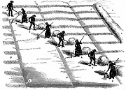 Crop Rotation: Haymaking. In Norfolk 4-course system, wheat planted first year, followed by turnips, then barley, often underplanted with grass or grass and clover ley to be used for hay or grazing in 4th year. Engraving 1855