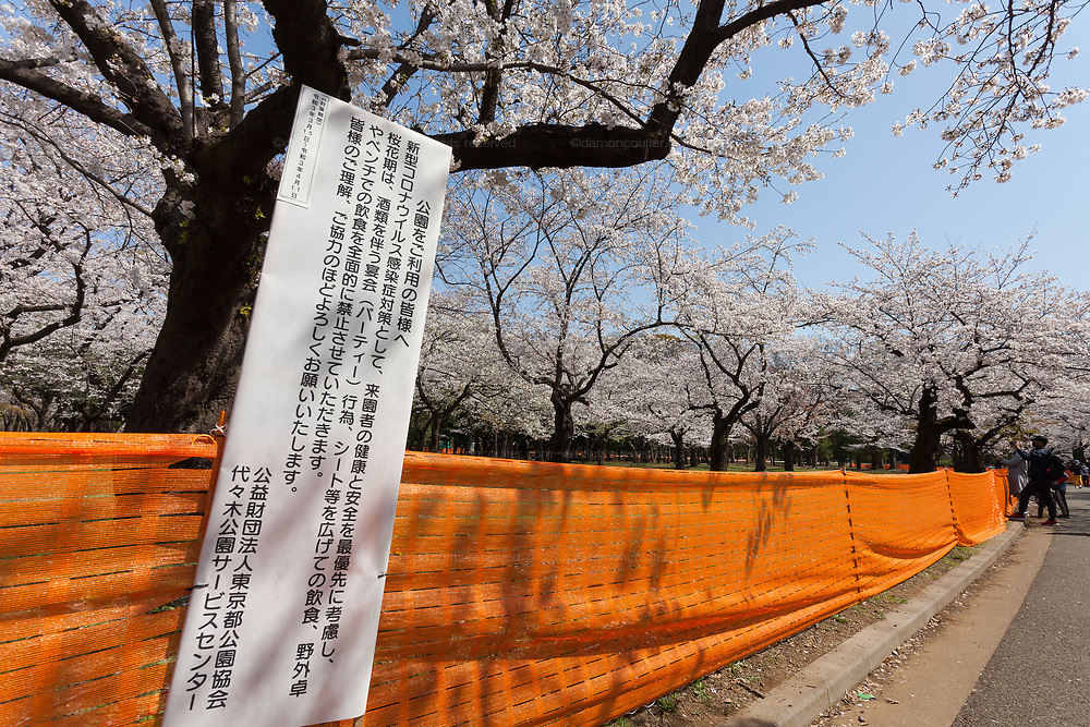 A sign informing people of measures to avoid people gathering for Hanami parties under the cherry blossoms in Yoyogi Park, Shibuya, Tokyo, Japan. Friday March 26th 2021, Though Tokyo lifted its Coronavirus State of  Emergency at midnight on March 21st the annual Hanami , cherry blossom parties and other gatherings of large number of people are still limited and discouraged.
