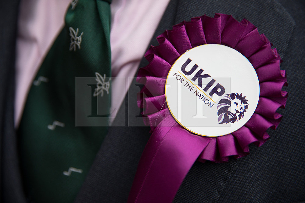 © Licensed to London News Pictures . 29/09/2017 . Torquay , UK . A UKIP rosette featuring the party's new lion logo and tagline For the Nation . The UK Independence Party Conference at the Riviera International Centre . UKIP is due to announce the winner of a leadership election which has the potential to split the party . Photo credit: Joel Goodman/LNP