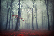 Peaceful foggy forest scenery in late autumn.<br /> Texturized photograph<br /> Prints & more: http://society6.com/DirkWuestenhagenImagery/masked-world_Print#1=45