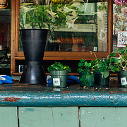 A gardening stand highlights potted plants in downtown Seattle, Washington.