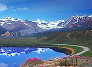 Summer view of Summit  Lake reflecting the snow capped mountains of the Alaska Range with the Richardson Highway.  Dwarf Fireweed/  River Beauty  (Epilobium latifolium) wild flowers bloom in the foreground. Gulkana Glacier in the distance,