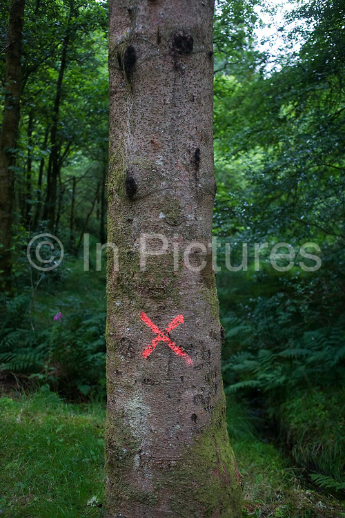 X marks the spot. In a forest on Scotland's west coast we see a solitary red painted cross on the trunk of a tree in Inchree. Two diagonal lines have been painted on the bark to signify an unknown mark, identifying the tree as significant for some undetermined reason. The red is almost fluorescent in hue and stands out proudly against the dark greens of the woods.