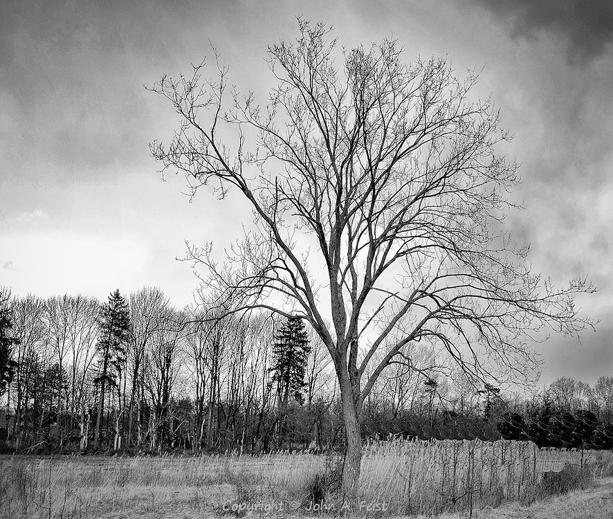 Another tree standing out against the winter sky.  It looks like a storm is moving in at the top left.