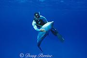 Spot, a wild, lone, sociable bottlenose dolphin, Tursiops truncatus, with pal Jason Belport, Cayman Brac, Cayman Islands ( Caribbean Sea ) MR 281