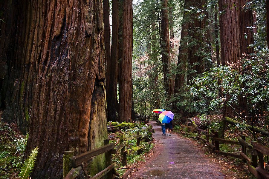 A pair of tourists holding rainbow umbrellas stroll through Cathedral Grove redwoods on a rainy afternoon in Muir Woods National Monument, California.