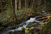 Whale Creek is a tributary to the Clackamas River in the Mount Hood National Forest, Oregon.