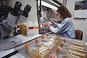 (1992) Leslie Jerominski trypsinizing hybred cells and expanding them to larger Flasks (trypsin enzyme) in Ray White's lab.  Howard Hughes Medical Institute, Salt Lake City, Utah. DNA Fingerprinting. MODEL RELEASED.