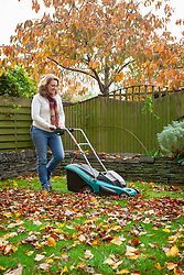 Making leaf mould. Picking up fallen leaves using a lawn mower