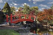 Japanese Garden - Tasmania