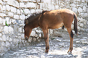 A donkey ass standing in the shadow by a white stone wall. Berat upper citadel old walled city. Albania, Balkan, Europe.