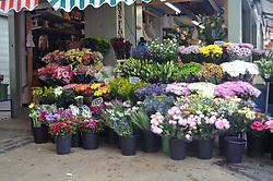 Flower stall, Norwich market