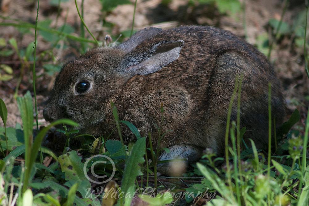 Bunny in hiding.